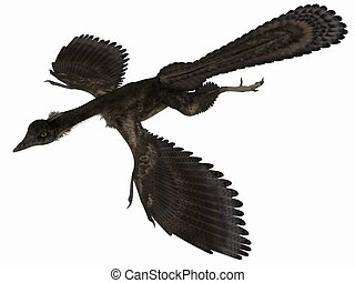 Archaeopteryx - 3D Dinosaur - 3d render of an Archaeopteryx...