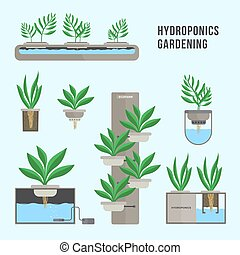 Hydroponic system, gardening technology. Collection of different plants in flat style.