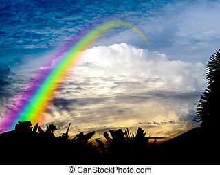 rainbow of god from heaven silhouette tree
