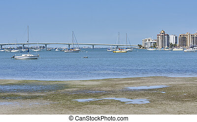 Sarasota, florida harbor - Sarasota,Florida harbor and...