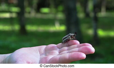 The rise. Child boy hold maybug in his hand. Macro shot of...