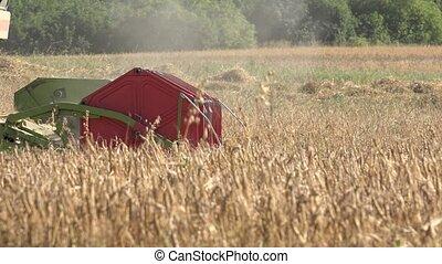 close up harvester thresh grain crops in farm at summer. 4K...