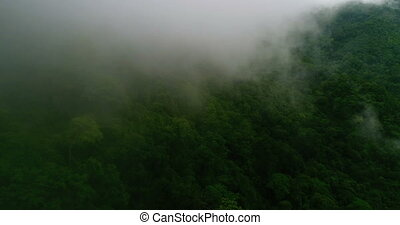 Aerial view of beautiful green hills mountains forest...