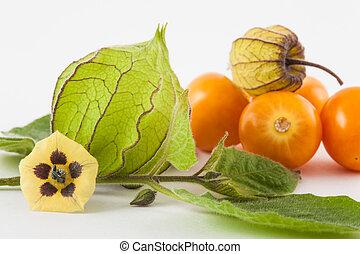 Cape gooseberry fruit, flower and calyx (Physalis peruviana)...