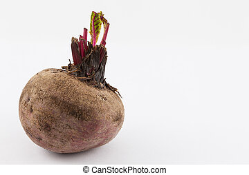 Beetroot (Beta vulgaris) isolated in white background