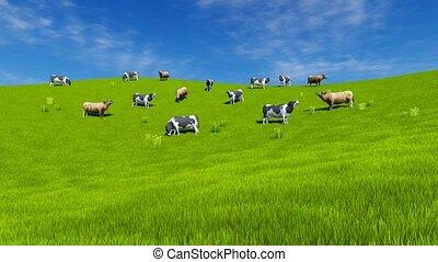 Milk cows graze on green grassland 4K - Rural landscape with...