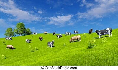 Dairy cows grazing on green pasture 4K - Countryside scenery...