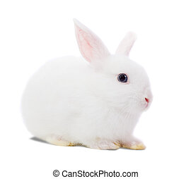 white rabbit - Little white rabbit Isolated on white...