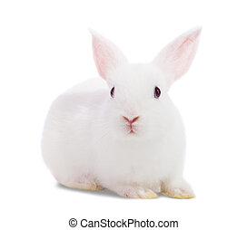 Little white rabbit. Isolated on white background