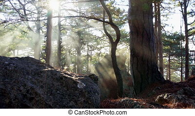 Sunlights in the autumn forest in Crimea