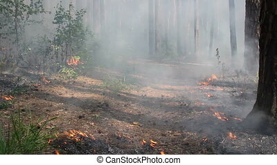 Burning peat bog in the forest