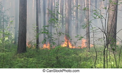 The forest burns hot in summer - The spread of fire in the...