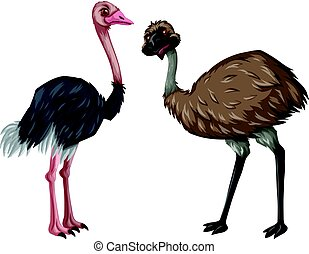 Emu and ostrich on white background illustration