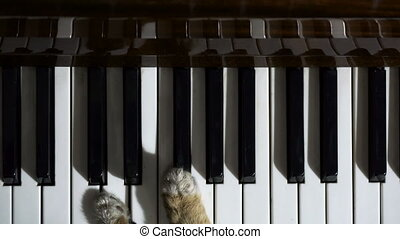 cat plays the piano top view