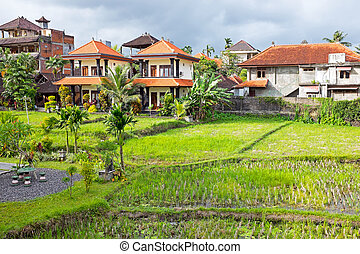 Typical balinese houses inbetween the rice fields in Bali...