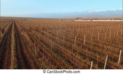 Vineyard in winter with background of snowy mountains