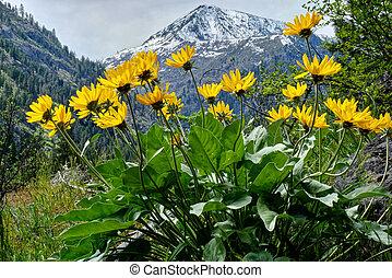 Arinca in alpine meadows.