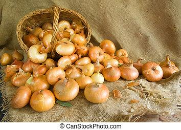 onion on sacking