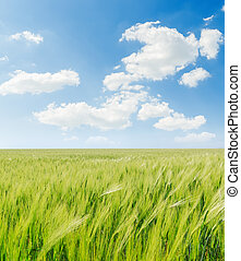 green agricultural field and white clouds in blue sky