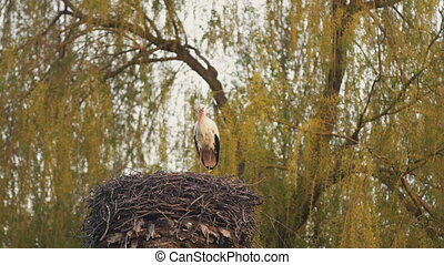 The crane guards its nest - Crane guards its nest from...