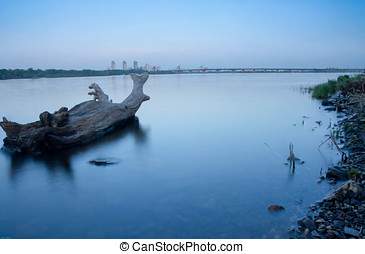 Oid tree in water. City river. Dnipro.
