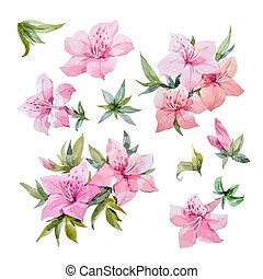 Watercolor rhododendron flowers - Beautiful set with...