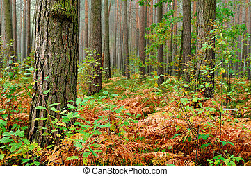 Prehistoric forest - Coniferous forest with prehistoric...