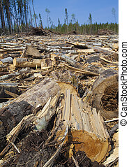 Forest that has been logged - Lots of logs and wood on the...