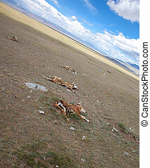 Dead animals in the desert steppe