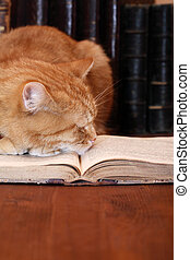 Smart Dream - Closeup of ginger domestic cat slipping on...