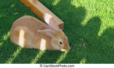 rabbit sitting on the green grass and eat it.