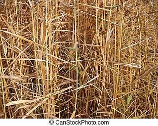 Fall grass background - Autumn grass background...
