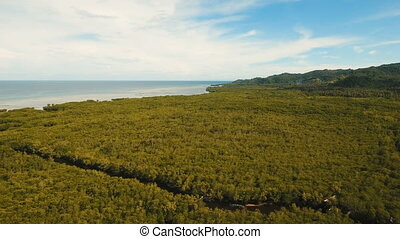 Mangrove forest in Asia. Philippines Bohol island. - Aerial...