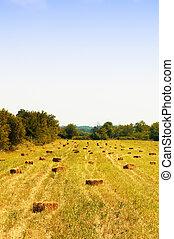 Bale - Golden bale in farm field of corn
