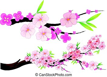 Cherry blossom flowers on branches