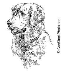 Vector Golden retriever - Vector Portrait of dog Golden...
