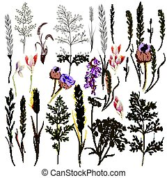 Big collection of vector field flowers and plants in old style.eps