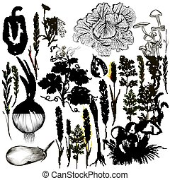 Big collection of vector vegetables and plants in old style.eps