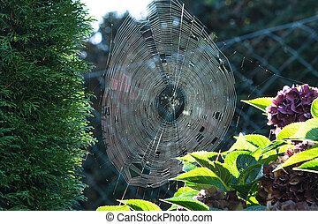 Spinnennetz mit Morgentau mit Gegenlicht - Das Spinnennetz...