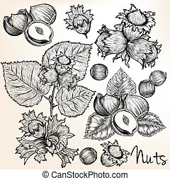 Collection of vector high detailed hand drawn nuts in engraved style.eps