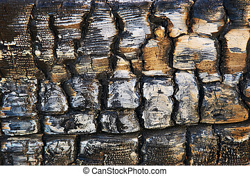 charcoal - burnt wood background