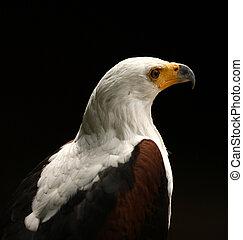 Sea Eagle - Portrait of a Sea Eagle looking proud against a...