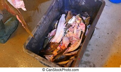 A male hand throws fish skeleton into a black plastic crate. The skeleton of the cod fish after removing the fillet from the fish hips. Male legs in heavy rubber boots steps around the crate.