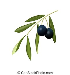 Olive branch with black olives on a white background...