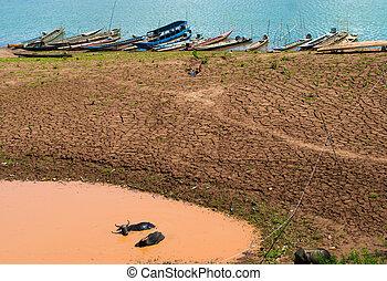 Buffalo relaxing in a mud wallow Near the Mekong River