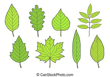 hand drawn set of green leaves with veins