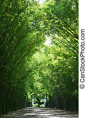 Tunnel bamboo trees and walkway, Nakhon Nayok Province in...