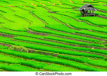 Terrace rice fields in Mae Chaem District Chiang Mai,...