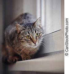 Striped cat on a window sill.