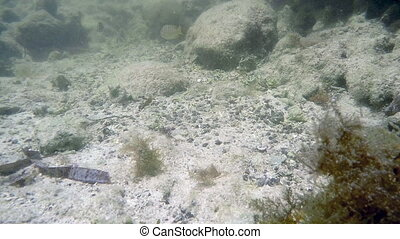 Little saltwater fish in tidal pool - Florida Keys little...